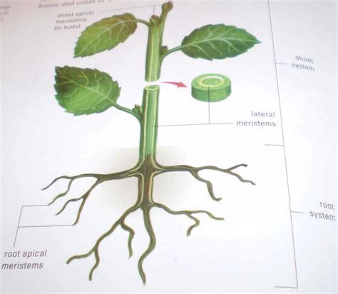 Wiring Diagram Free Js1000 by Diagram Oat Plant Diagram Version Hd Quality Plant