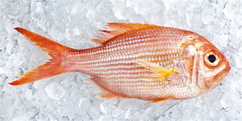How Long Does Fresh Fish Last In The Fridge After You Buy