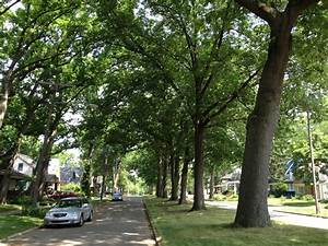 ACTrees Announces 2014 Street Trees Photo Contest Winners ...