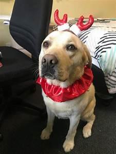 Laisser Un Chien Seul Quand On Travaille : 29 fois o des chiens ont tout fait pour obtenir le titre de bon chien chien et c tait ~ Medecine-chirurgie-esthetiques.com Avis de Voitures