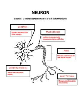 label the parts of a neuron by hoover teachers