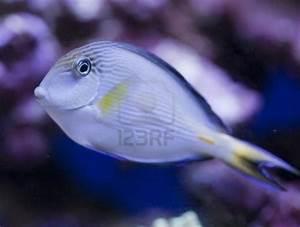 Diy Aquarium Light Reflector - WoodWorking Projects & Plans