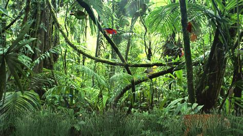 Animated Jungle Wallpaper - jungle animated wallpaper http www desktopanimated