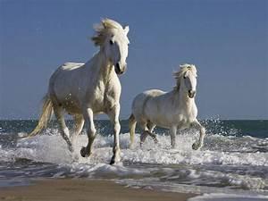 2 white horses | Horses Running Through Water | Pinterest