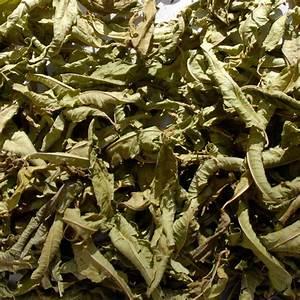 Verveine Plante Tisane : tisane verveine odorante bio lippia citriodora 20g ~ Mglfilm.com Idées de Décoration