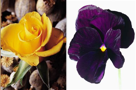 anniversary flowers yellow rose violet