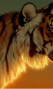 Tiger Evening Glow 5k, HD Animals, 4k Wallpapers, Images ...