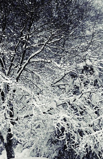 winterscape by au mon pêche Winter wonder Winter wood