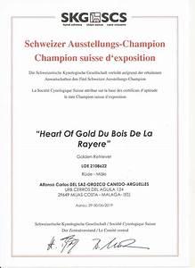 Certificados De Minzah  U2013 Terra Di Siena Golden Retrievers