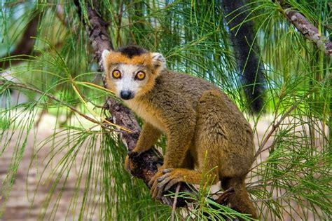 Clover/Other Madagascar Wiki FANDOM powered by Wikia