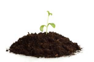 Soil Types and Plant Growth