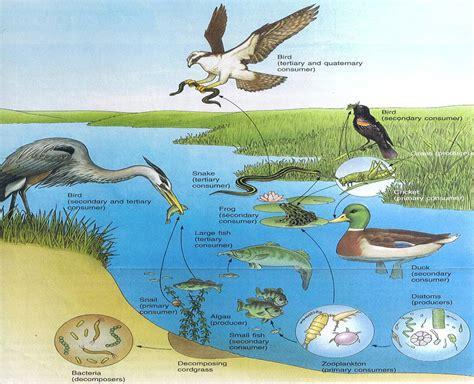 ธรรมชาติสีเขียว: ระบบนิเวศธรรมชาติ