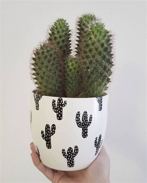 diy cactus patterned flower pots with permanent markers