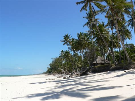 Somali beaches are lacking Palms - SomaliNet Forums