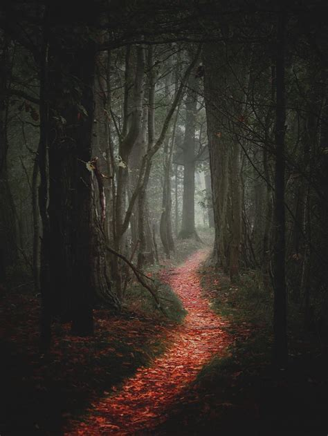 forests paths  dark forest  pinterest