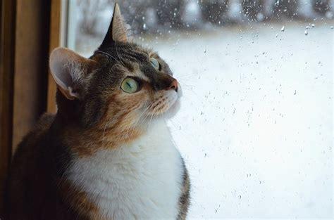 achtung kippfenster todesfalle fuer katzen