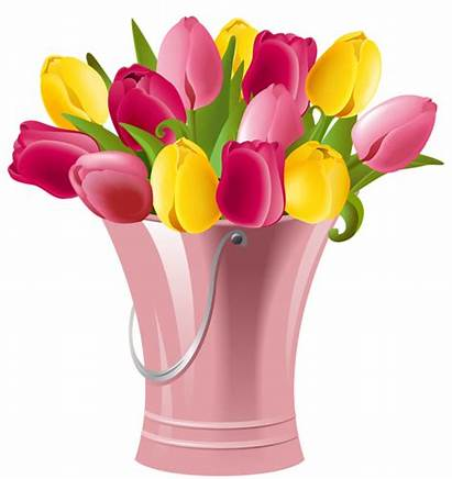 Tulips Spring Transparent Clip Clipart Bucket Cliparts