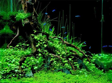 Award Winning Aquascapes by Still Water Aquatics Gears Up For The Great Indian