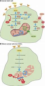 Metabolic Traits Of Cancer Stem Cells