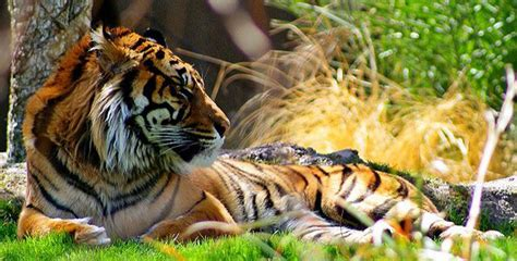 The History Of Animal Welfare In U.s. Zoos & Aquariums