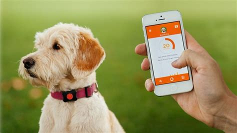 dog gps tracker reviews  top care  dogs