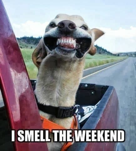 smell  weekend   awesome weekend