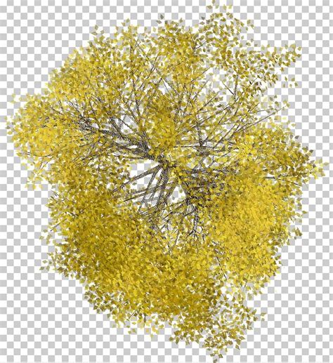 tree space plant  wood png clipart arboles branch