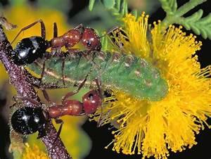 Symbiotic Relationships | Pintar Biologi