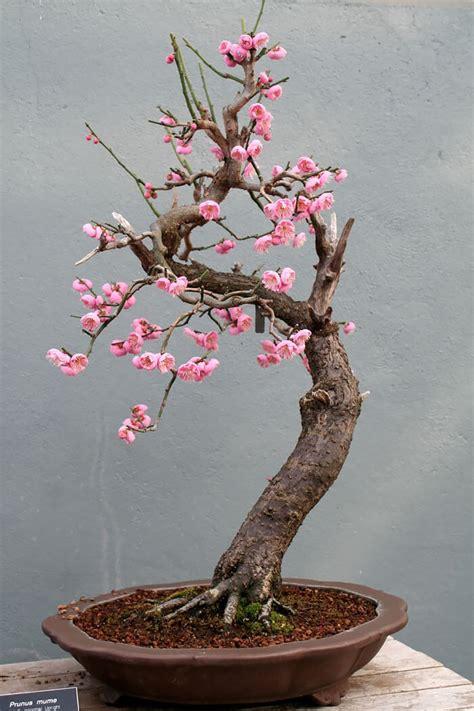 bonsai trees    perfect tiny version  nature