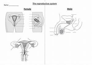 Ks3- Reproduction - Lesson 2