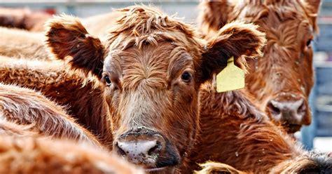 beef  synchronization protocols