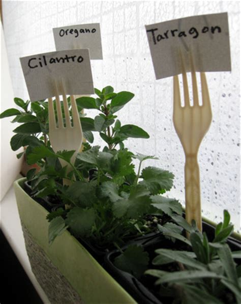 indoor herb garden activity education