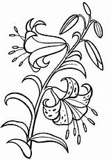 Coloring Flower Lily Printable Offline Coloringpagesfortoddlers Via sketch template