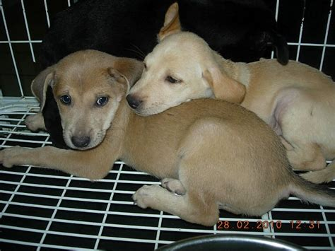 Duuuhvana Klang Pound Mummy Dog  Ee  Puppies Ee   Up For Adoption