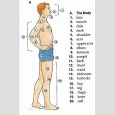 The Body Parts  English Vocabulary  Materials For Learning English