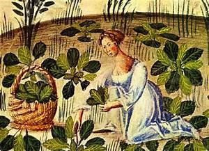 Pflanzen Nach Dem Mond : aussaatkalender im m rz f r kr uter und gem se katuschka ~ Lizthompson.info Haus und Dekorationen