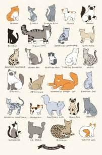 cat types cat breeds chart cat breeds cats charts