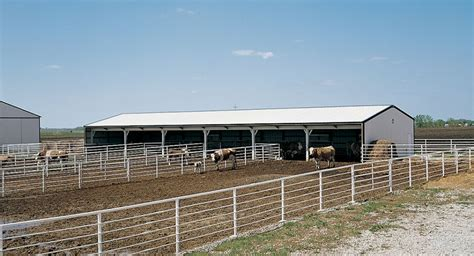 Steer Barn by Richard S Cattle Barn Morton Buildings Show Barns