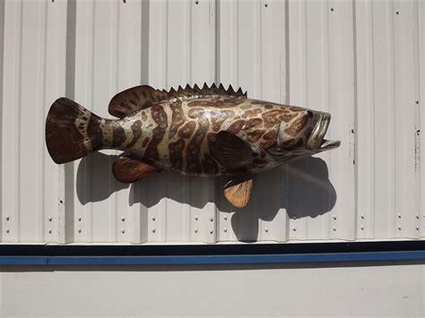 grouper goliath mount fish inch