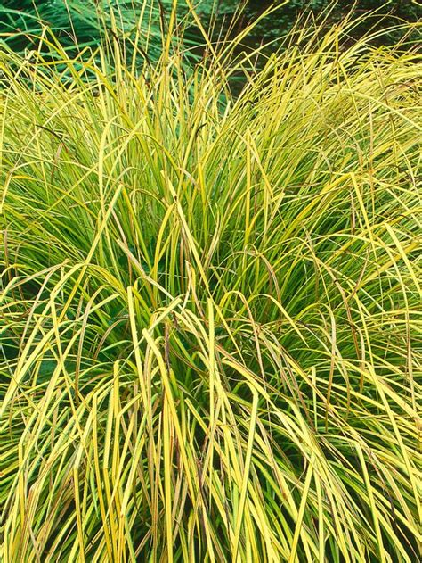 landscape grass types identifying plant types evergreen grasses and gardens