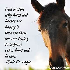 Horse Quotes Free Horses Quotes