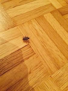 Mückennester In Der Wohnung : eklige k fer in der wohnung ungeziefer tiere wanze ~ Watch28wear.com Haus und Dekorationen