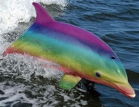 rainbow dolphin bing images  images marine animals dolphins animals