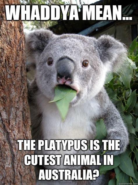 Platypus Meme - whaddya mean the platypus is the cutest animal in australia koala bear quickmeme