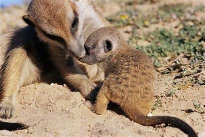 Animals Animal Young Teaching Teach Teachers Parents