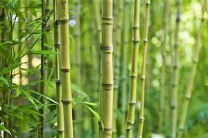 Bambus Vernichten Tipps : bambus einpflanzen tipps dazu erhalten sie hier ~ Whattoseeinmadrid.com Haus und Dekorationen