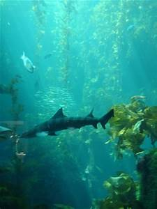 Why don't sharks in an aquarium eat the other fish? - The ...