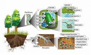 Technologies For Characterizing Molecular And Cellular Systems Relevant To Bioenergy And Environment