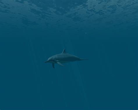 Dolphins 3d Screensaver And Animated Wallpaper - dolphins 3d screensaver and animated wallpaper 1 0 build 3