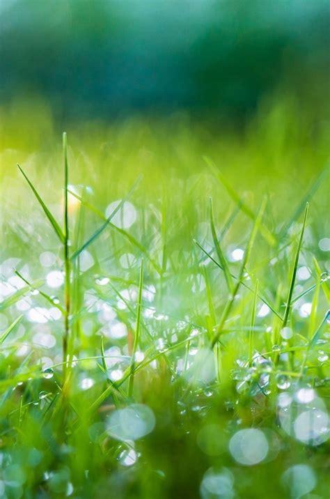 green nature morning grass iphone hd wallpaper